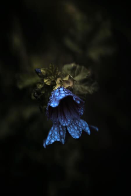 Düştüğün Yerlere Çiçek Ek