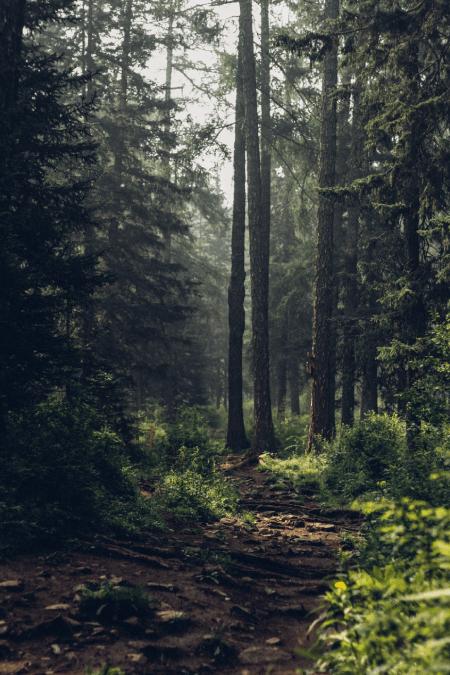 FELSEFEYE GİRİŞMEK - Bölüm 18: Yunus Emre