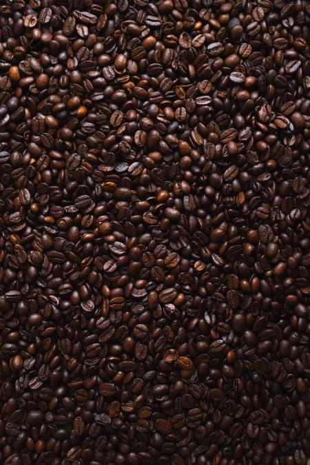 Kahve Ağacından Topladım Tüm Acıları