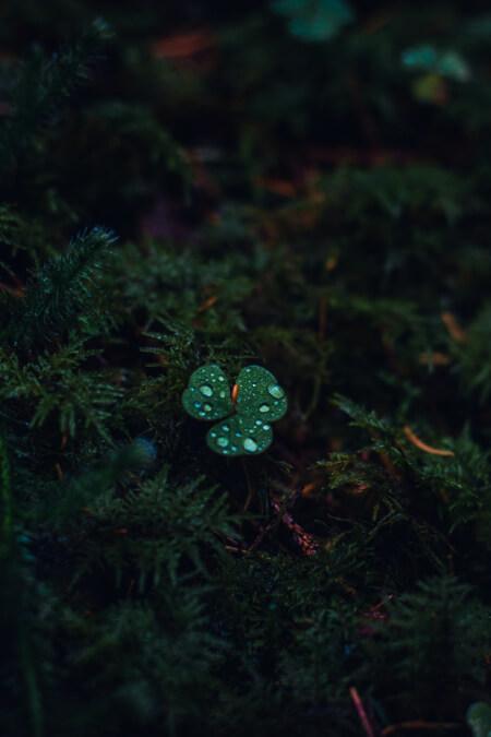 Kesilmeyen Yağmur