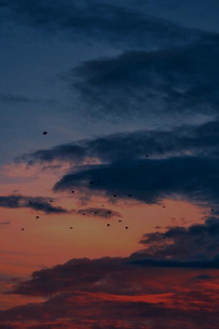 Sevgili Arsız Ölüm - Latife Tekin